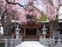 円光寺のしだれ桜 - morioka暇人日記2
