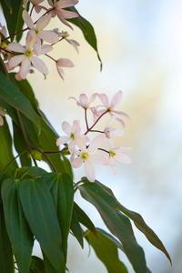 白い花 - tokoのblog