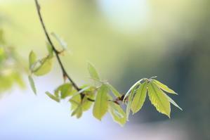 新緑の季節、、 - 幻に魅せられて…