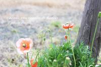 メルマガと。春のお散歩の。 - a piece of dream*