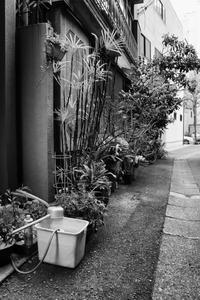 築地にて - Photo & Shot
