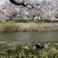 桜の木の下で - sharpshooter