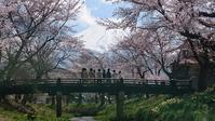 忍野八海:2017年4月 - スマホの写真であそぼっ! ~ 山とサクラと富士山、そして海、時々カフェ ~