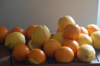 オレンジジュースの物語:何がきっかけで人生が変わるのかわからないなという話 - 村人生活@ スペイン