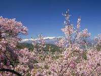 170423高遠の桜(1) - 一人の読者との対話