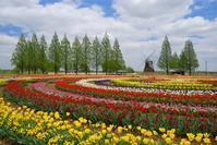 あけぼの山農業公園のチューリップ - 小さな風景への想い