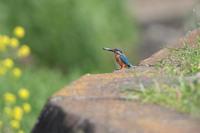止まりモノだけ - 野鳥と自然