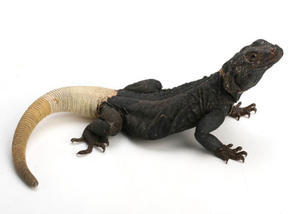 ドッカンと大量入荷! - ビーボックスアクアリウム 爬虫類・両生類情報