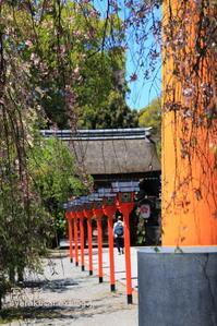 平野神社に行く - 写楽彩