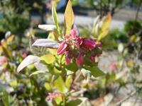 ブルーベリー - natural garden~       shueの庭いじりと日々の覚書き