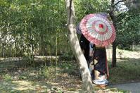 藤田邸跡の春景色 - 花さんぽ~☆
