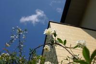 初夏の日差し - お庭のおと