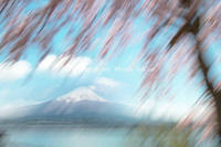 さくら咲いてます - 山麓風景と編み物