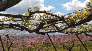 桃の花梨の花 - フレンズ2