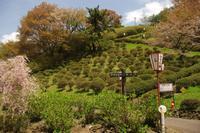 No 83  弥高山公園散策(平成29年4月22日) - カメラをもってぶらぶら散歩中