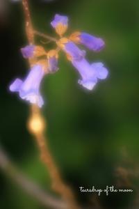 *桐の花に魅せられて* - 心写心癒  ~心の鏡~