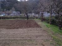 里芋と生姜を植えて、果樹も植えて。 - にじまる食堂 & にじまる農園