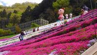 青もみじ&芝桜  IN 姫路夢前町 - ゆる~く、生きていこっ。