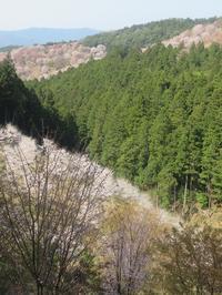 続・吉野桜の「一目千本」・・・その三 - 続・感性の時代屋