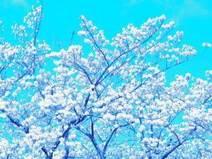 葛飾区小菅公園の春2。 - 一場の写真 / 足立区リフォーム館・頑張る会社ブログ