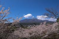 谷戸城趾の桜 - オーナーズブログ・八ケ岳南麓は晴れています!