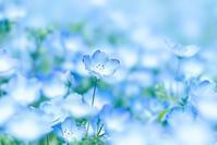 鶴見緑地(2)@2017-04-24 - (新)トラちゃん&ちー・明日葉 観察日記