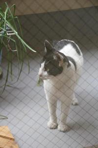 最近の猫事情23 - 鳥会えず猫生活