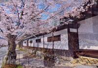 心地良い春の日 1 - 天野主税写遊館