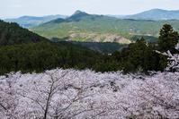 桜旅 奈良県大宇陀 - シセンのカナタ