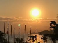 初夏は、紫外線が多い季節  - パームツリー越しにgood morning        アロマであなたの今に寄り添うブログ