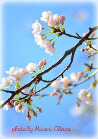 森林公園でのお花見 Nikon D800 - ひとみの興味津々でございます!日々のブログ
