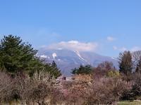 さくら~♪さくら~♪と凛さん♡ - 浅間山眺めてほのぼのlife~花だより♪