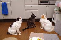 ごはん待ちの攻防 - ぶつぶつ独り言2(うちの猫ら2017)