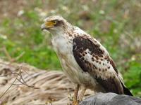 鳥見 - 日常の領収書