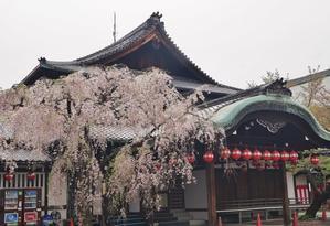 京の名残の桜をたずねて(1)祇園甲部歌舞練場の枝垂れ桜 - たんぶーらんの戯言