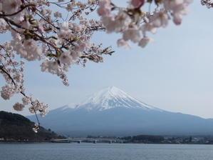 河口湖畔の富士山 - かぬまお