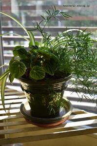 観葉植物の寄せ植え - 小さな庭 2