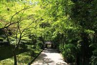 新緑の香嵐渓 - ぶん屋の抽斗