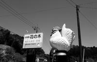 豊田市「花ノ木」で半身焼き鳥 - ぶん屋の抽斗