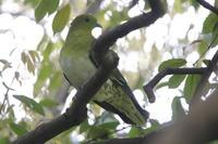 春のコムクドリ - 野鳥写真日記 自分用アーカイブズ