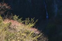 新緑の谷  白鬚岳 - 峰さんの山あるき
