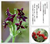 アオキの花、オダマキ等庭に咲いてるお花達 - 気ままにデジカメ散歩