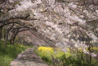 葉桜の小径 - ぽとすのくずかご