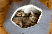 猫の巣の正しい使い方 - 猫と夕焼け