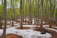 新緑の季節 - 松之山の四季2