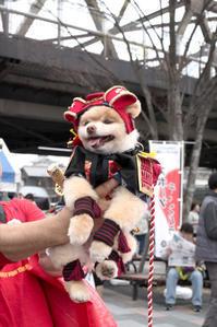 サムライワンちゃん☆彡 - DAIGOの記憶