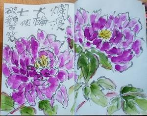 牡丹の花に思う - 絵手紙の小窓