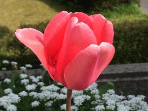 でも本当に  女性議員が増えて、良かった! - 松江に行こう。奈良 京都  松江。3つの国際文化観光都市  松江市議会議員 貴谷麻以きたにまい
