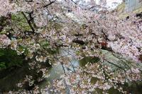 祇園白川 - 都忘れと忘れな草