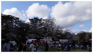 千秋公園桜まつり - とらのおたけび